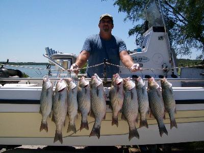 Benbrook hybrids for Benbrook lake fishing